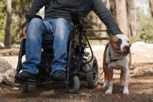 man in wheelchair petting his dog