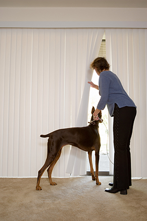 woman looking out her blinds while holding leash of Doberman